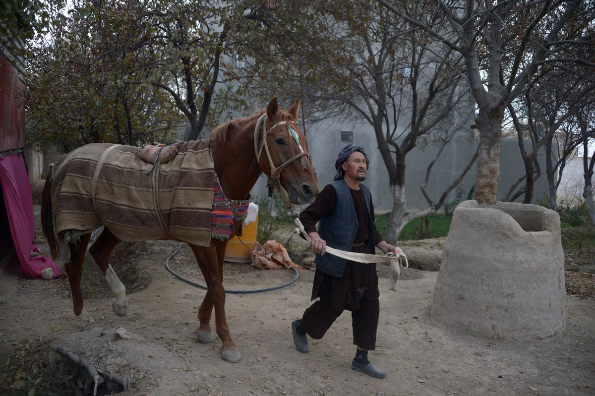 This photo taken on November 8, 2017 shows an Afghan man, who takes care of horses used to play the traditional sport of buzkashi, walking with a horse in Mazar-i-Sharif.