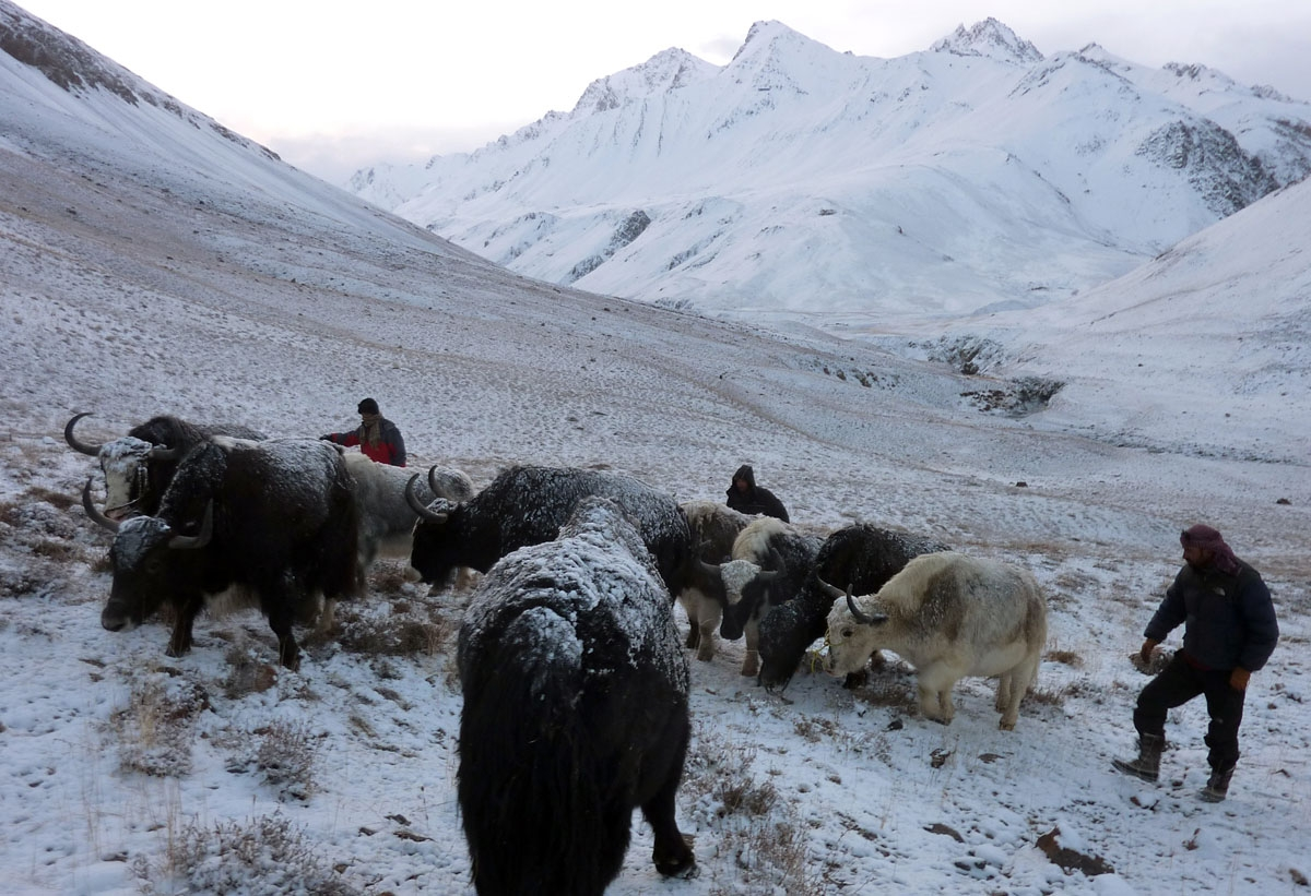 This picture taken on October 12, 2017 shows traders from Pakistan's northern Hunza valley travelling with yaks on a snow covered mountain near the Pakistani border in the Wakhan Corridor in northern Afghanistan.