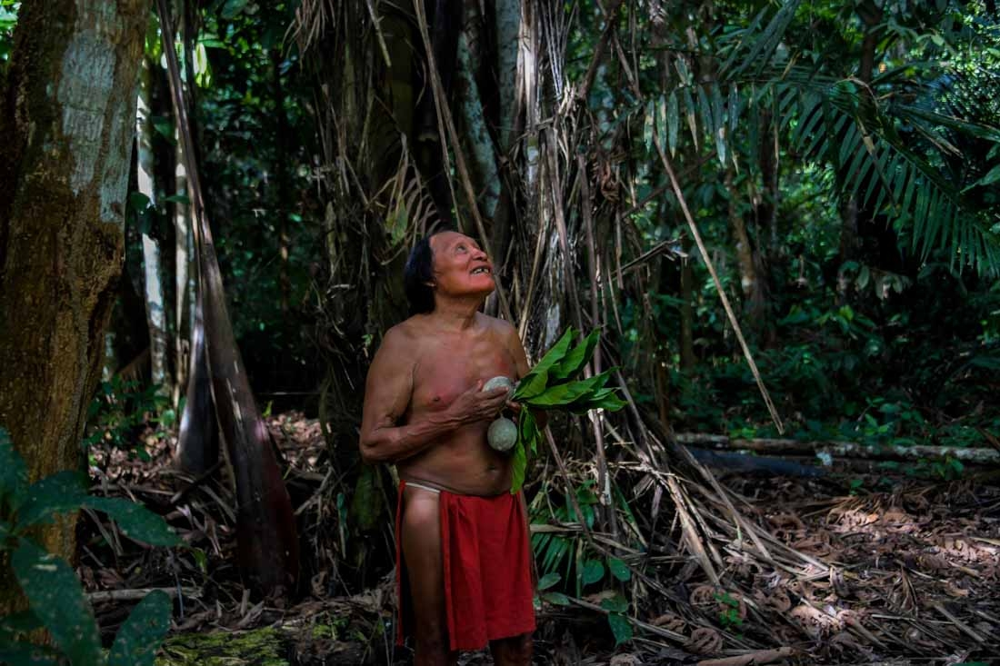 A Waiapi man looks at a boy picking fruits from a Geninapo tree at the Waiapi indigenous reserve in Amapa state in Brazil on October 13, 2017.