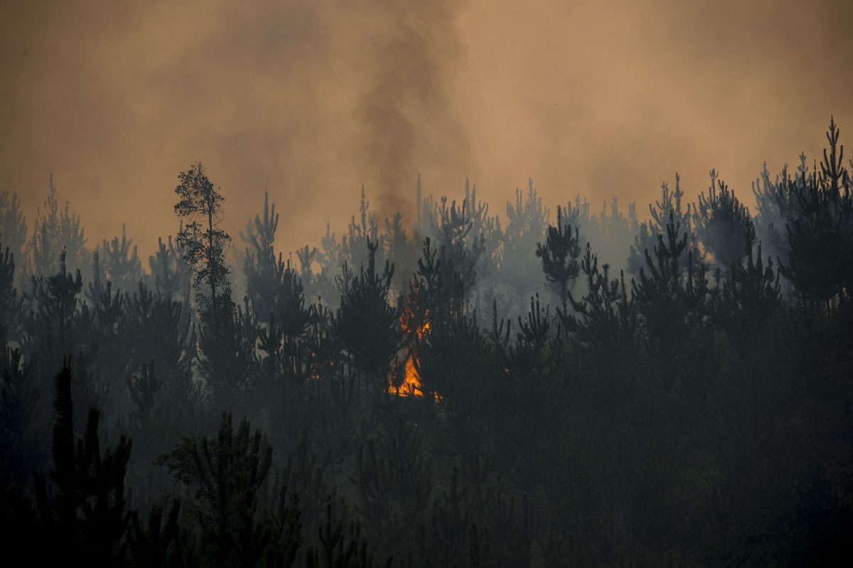 View of a forest fire in Llico, 250 km south of Santiago, on January 27, 2017.