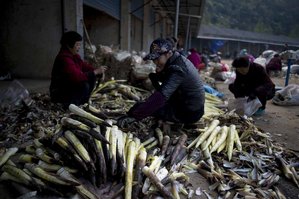 This picture taken on April 12, 2017 shows women cleaning bamboo shoots at a market in Taihuyuan near the city of Lin'an, Zhejiang Province.