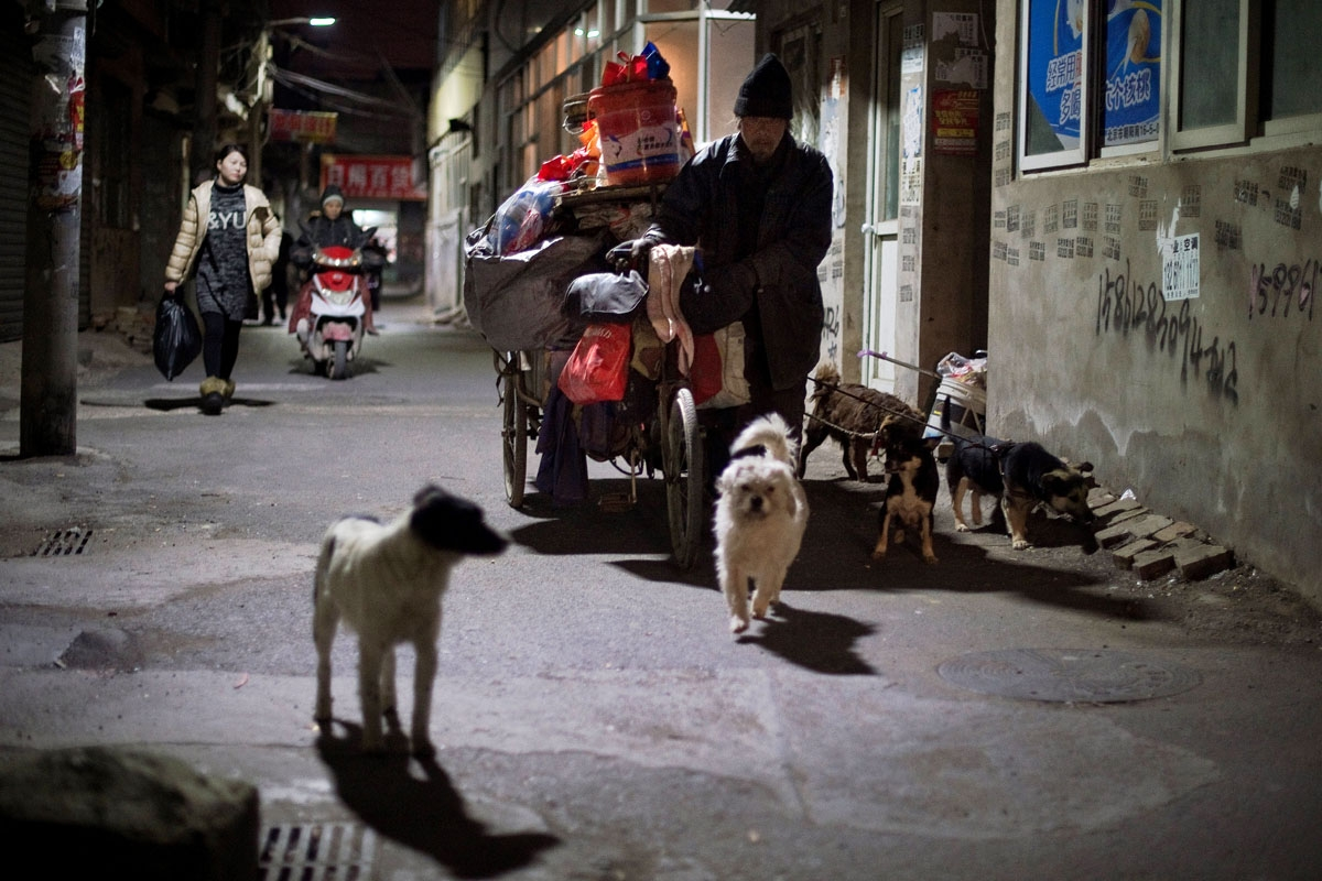 This picture taken on February 16, 2017 shows a man pushing his tricycle filled with stuff as he walks with his dogs on a street in the Heiqiaocun migrant village in Beijing.