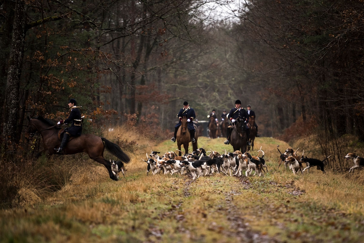 Huntsman Philippe Prioux (L), from the Rallye Tempete rides his horse during a hunting with hounds on December 23, 2017 in the forest near Chatenoy, center France.