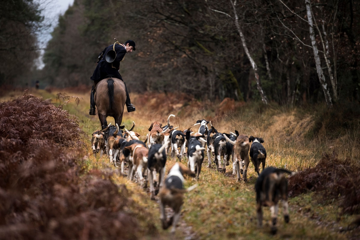 Huntsman Philippe Prioux, from the Rallye Tempete rides his horse during a hunting with hounds on December 23, 2017 in the forest near Chatenoy, center France.