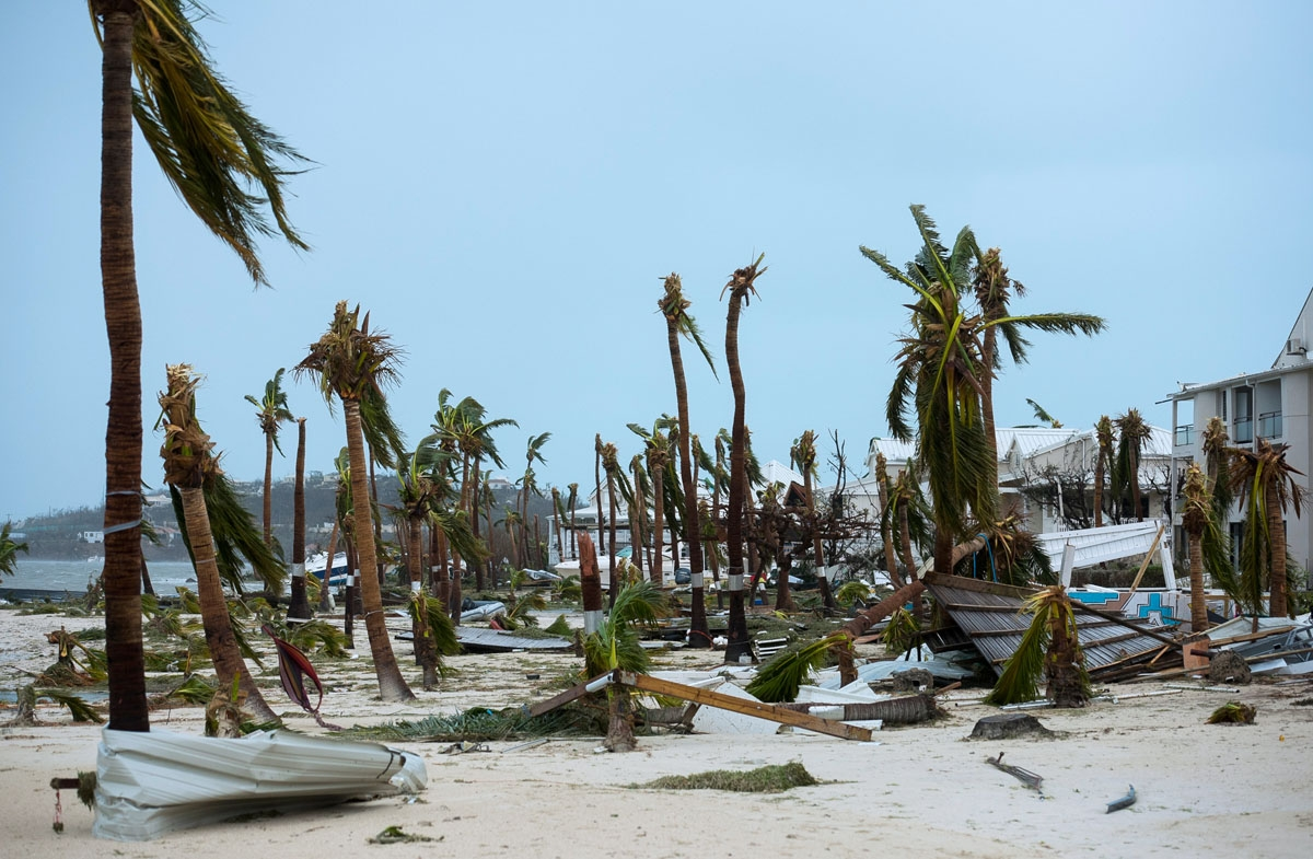A photo taken on September 6, 2017 shows broken palm trees on the beach of the Hotel Mercure in Marigot, near the Bay of Nettle, on the French Collectivity of Saint Martin, after the passage of Hurricane Irma.