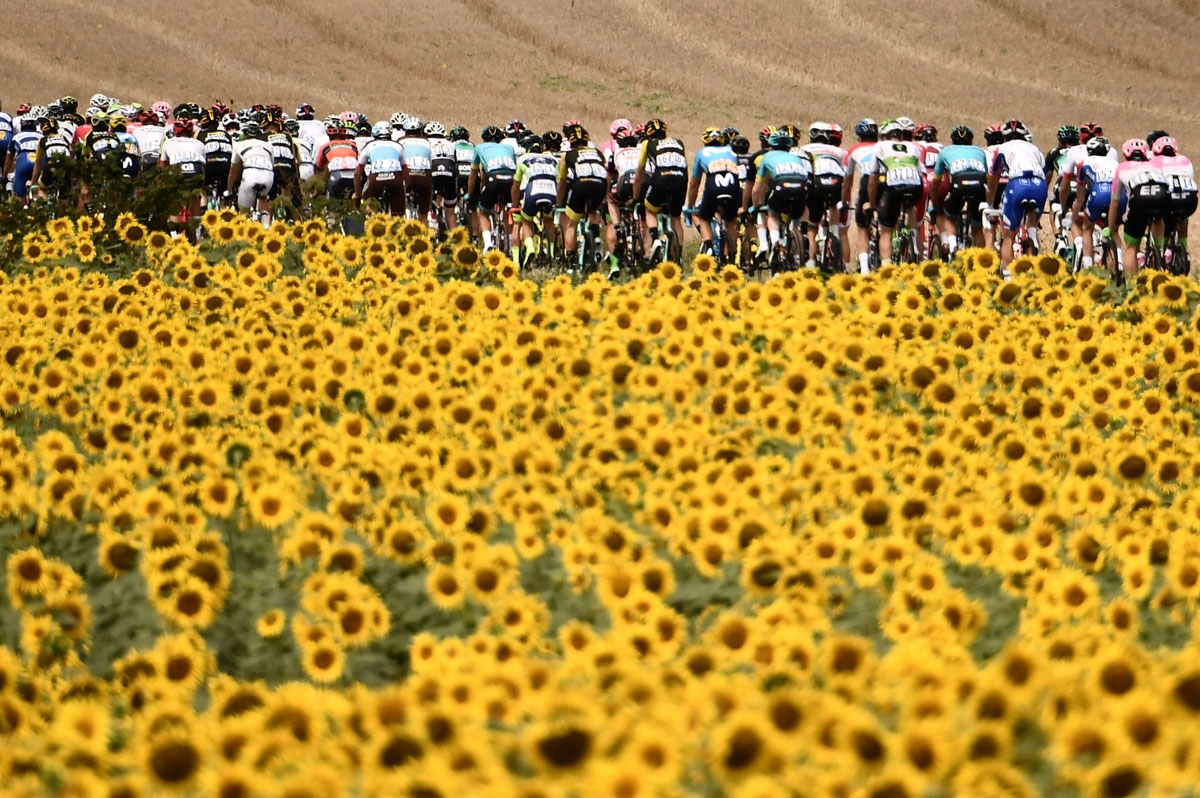 The pack rides through sunflower fields during the 16th stage of the 105th edition of the Tour de France cycling race, between Carcassonne and Bagneres-de-Luchon, southwestern France, on July 24, 2018.  / AFP PHOTO / Marco BERTORELLO