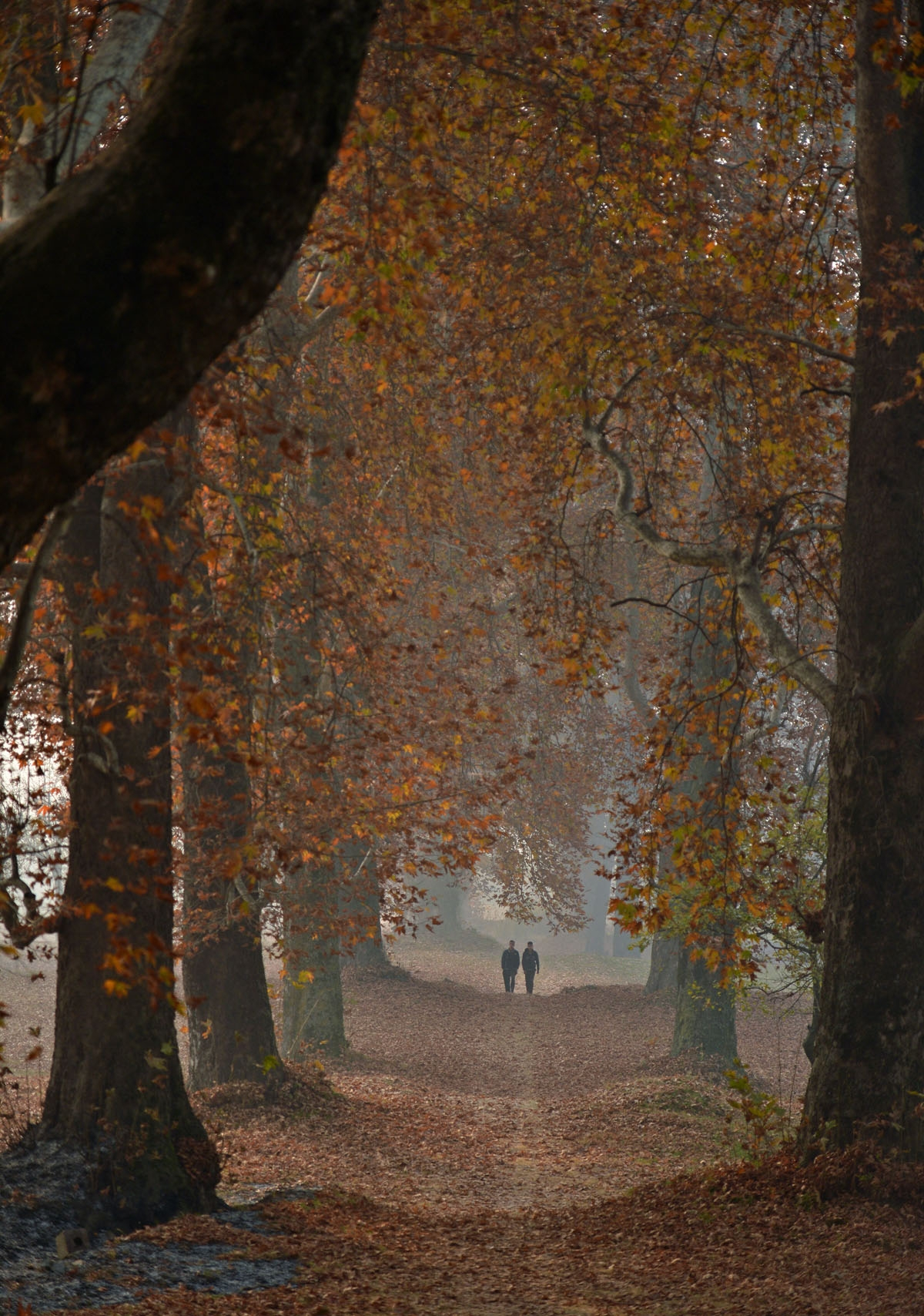 Indian Kashmiris walk next to maple trees in autumn in Srinagar on November 18, 2016.