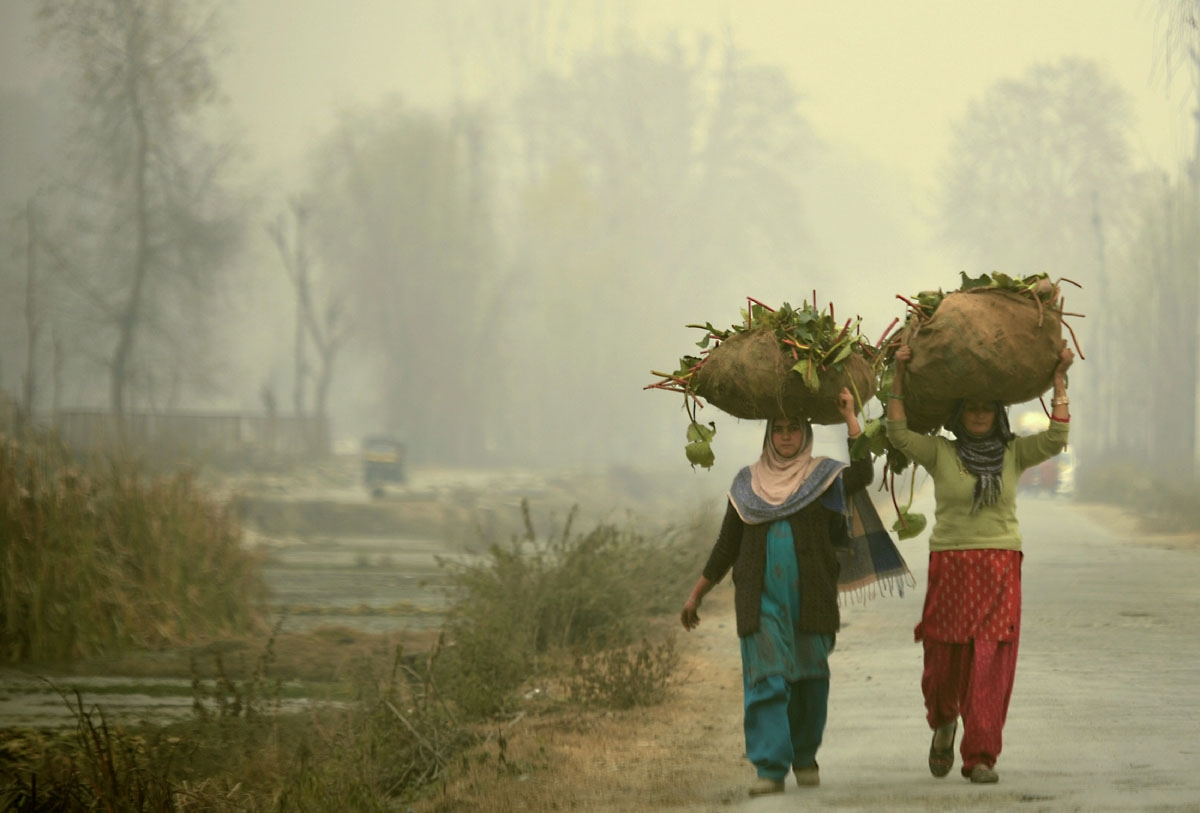 Kashmiri women carry lotus roots for cattle feed on a cold, winter's day in Srinagar on November 23, 2016.