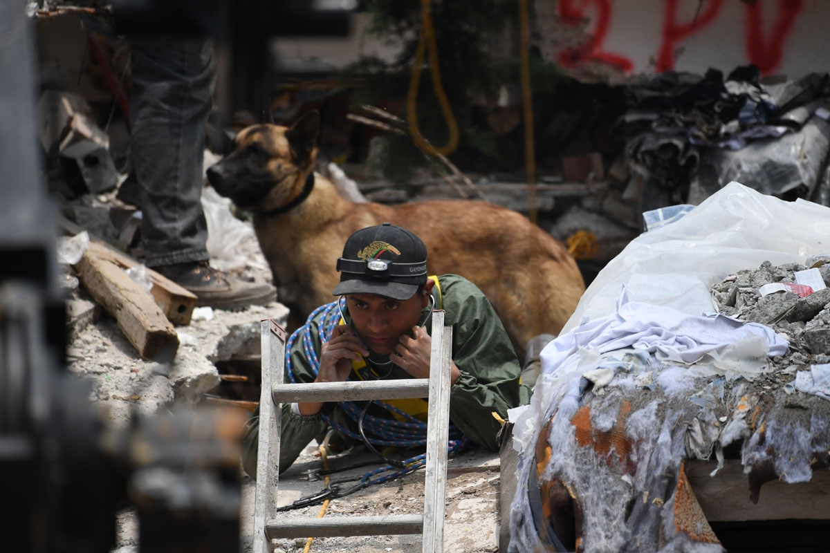 A sniffer dog stands behind a rescue worker taking part in the search for survivors in Mexico City on September 21, 2017 two days after a strong quake hit central Mexico.