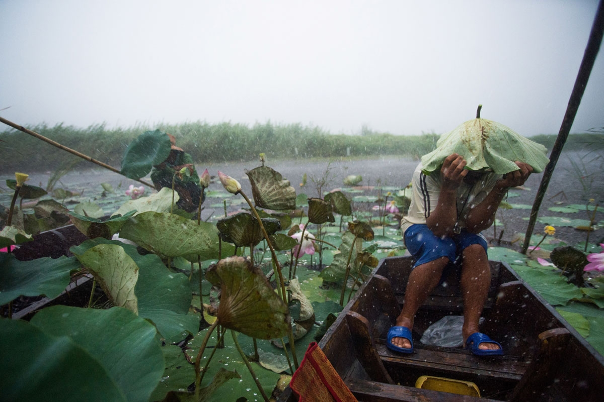 In this photograph taken on May 5, 2017, a local tourist guide uses a lotus leaf to shield his head during a summer storm, that swept in from the Gulf of Thailand, while riding in a canoe on a lake in the Khao Sam Roi Yot national park in southern Thailan