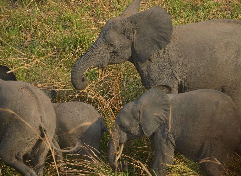 Des éléphants dans le parc national de la Garamba, en R.D. du Congo, le 7 février 2016 (AFP / Tony Karumba)