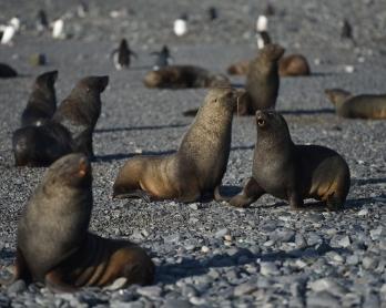 Antarctica-tourism-environment