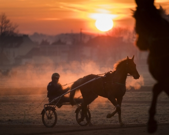 A horse and its driver attend a training session at the equestrian training center of Grosbois in Marolles-en-Brie, on December 6, 2016.  / AFP PHOTO / MARTIN BUREAU