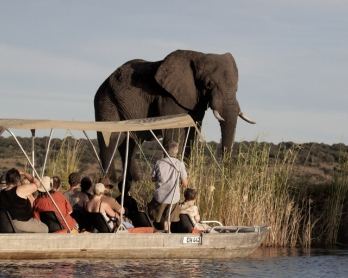 BOTSWANA-ENVIRONMENT-WILDLIFE-ELEPHANTS-FILES