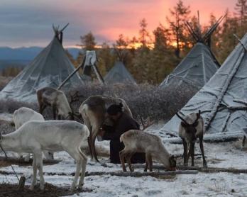 Ganbat Punsul trayant ses rennes, à l'aube (AFP / Greg Baker - collection personnelle)